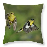 Lesser Goldfinch Pair In Flight Throw Pillow