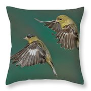 Lesser Goldfinch Pair In The Air Throw Pillow