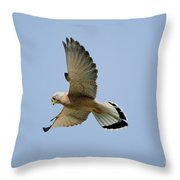 Lesser Kestrel Falco Naumanni Throw Pillow