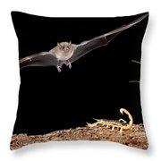 Lesser Long-nosed Bat Approaching Throw Pillow