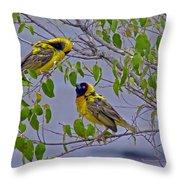Lesser Masked Weaver Throw Pillow