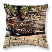 Lesser Nighthawk Chordeiles Acutipennis Throw Pillow