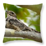 Lesser Nighthawk On Branch Throw Pillow