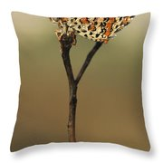 Lesser Spotted Fritillary Throw Pillow by Alon Meir