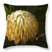 Leucospermum  -   Yellow Pincushion Protea Throw Pillow