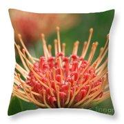 Leucospermum Pincushion Protea Flower - Tropical Sunburst - Hawaii Throw Pillow