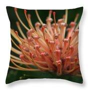 Leucospermum  Pincushion Protea Tropical Sunburst Protea Flower  Throw Pillow