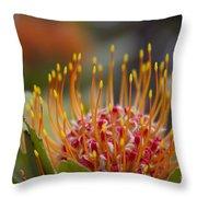 Leucospermum Pincushion Protea - Tropical Sunburst Throw Pillow