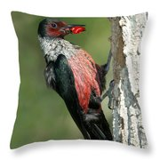 Lewiss Woodpecker With Fruit In Beak Throw Pillow