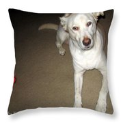 Liberty The Dog And Her Ball Throw Pillow