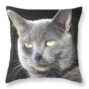 Library Cat Throw Pillow