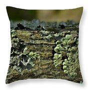 Lichen Macro I Throw Pillow