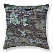 Lichen Macro II Throw Pillow