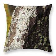 Lichen On Headstone Throw Pillow