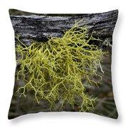 Lichen On Limb Throw Pillow