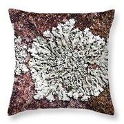 Lichen On Rock Throw Pillow