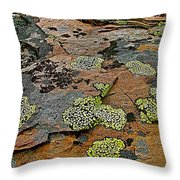 Lichens Along Trail To Plain Of Six Glaciers In Banff National Park-alberta-canada Throw Pillow