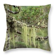 Lichens On Tree Branches In The Scottish Highlands Throw Pillow