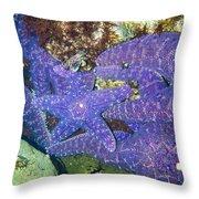 Life Among The Stars Throw Pillow