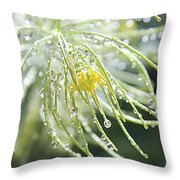 Light Catchers Throw Pillow