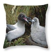 Light-mantled Albatross Feeding Chick Throw Pillow