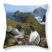 Light-mantled Albatrosses Courting Throw Pillow