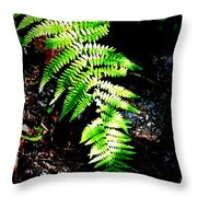 Light Play On Fern Throw Pillow
