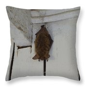 Lighthouse Bat Throw Pillow
