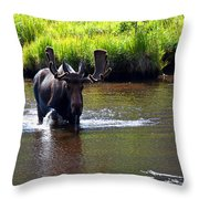 Like A Bull In A China Clloset Throw Pillow