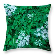 Like Queen Annes Lace Throw Pillow