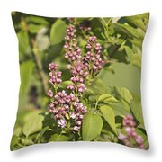 Lilac In Spring Throw Pillow