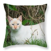 Lilac Point Siamese Cat Throw Pillow