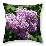 Lilac Ready For A Closeup Throw Pillow