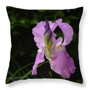 Lilac Siberian Iris Throw Pillow