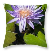 Lilac Water Lily Throw Pillow