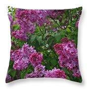 Lilacs At Hulda Klager Lilac Garden Throw Pillow