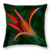 Lily 4 Throw Pillow