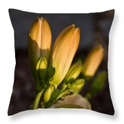 Lily Blossoms At Sunset Throw Pillow