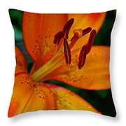 Lily Closeup Throw Pillow