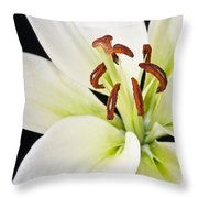 Lily In Winter Throw Pillow