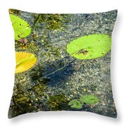 Lily Leafs On The Water Throw Pillow