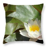 Lily Of Sydney Throw Pillow
