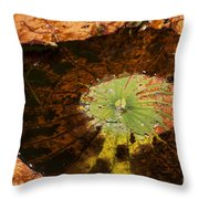 Lily Pad Color Throw Pillow