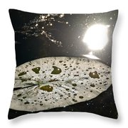 Lily Pad In The Sun Throw Pillow