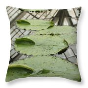 Lily Pads With Reflection Of Conservatory Roof Throw Pillow