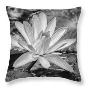 Lily Petals - Bw Throw Pillow