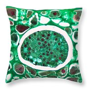 Lily Seed Embryo, Lm Throw Pillow