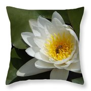 Lily's Sweet Visitor Throw Pillow