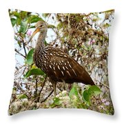 Limpkin In A Tree Throw Pillow