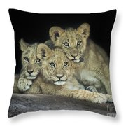 Three Lion Cubs Throw Pillow